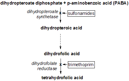 Tetrahydrofolate synthesis pathway