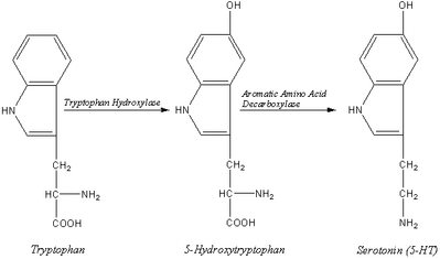 Biosynthesis of the Neurotransmitter Serotonin.2